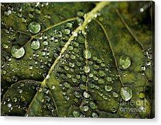 Acrylic Print featuring the photograph Raindrops by Dennis Bucklin