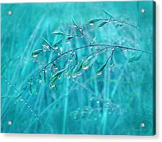 Acrylic Print featuring the photograph Raindrops Falling On Teal Blue Grasses by Jennie Marie Schell
