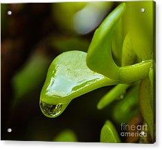 Raindrops I Acrylic Print
