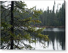 Raindrops On An Evergreen Acrylic Print by Larry Ricker