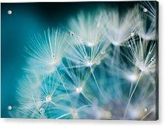 Raindrops On Dandelion Sea Blue Acrylic Print