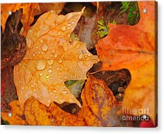 Raindrops On Fallen Maple Leaf Acrylic Print