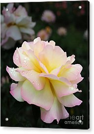 Acrylic Print featuring the photograph Raindrops On Rose Petals by Barbara McMahon