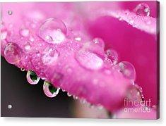 Raindrops On Roses Acrylic Print by Kaye Menner