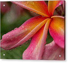 Acrylic Print featuring the photograph Raindrops by Sharon Jones