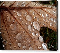 Raindrops  Acrylic Print by Steven Valkenberg