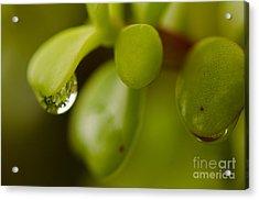 Raindrops V Acrylic Print
