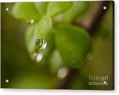 Raindrops Vi Acrylic Print