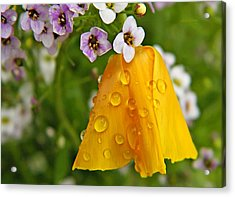 Rained Upon Acrylic Print by Chris Berry