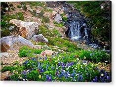 Rainer Glacial Meadow Acrylic Print by Allen Biedrzycki