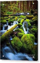 Rainforest Magic Acrylic Print by Inge Johnsson