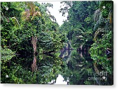 Rainforest Magic Acrylic Print by Li Newton