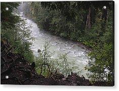 Rainforest River Acrylic Print by Amanda Holmes Tzafrir