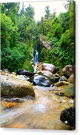 Acrylic Print featuring the photograph Rainforest Stream New Zealand by Amanda Stadther