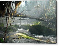 Rainforest Stream Acrylic Print
