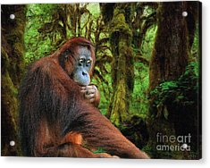 Rainforest Thoughts Acrylic Print