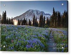 Rainier Evening Lupine Fields Acrylic Print by Mike Reid