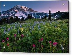 Rainier Flowering Meadow Acrylic Print