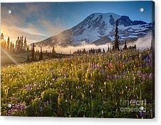 Rainier Golden Sunlit Meadows Acrylic Print by Mike Reid