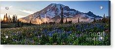 Rainier Wildflower Meadows Pano Acrylic Print by Mike Reid