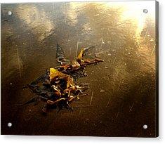 Rainkelp Acrylic Print