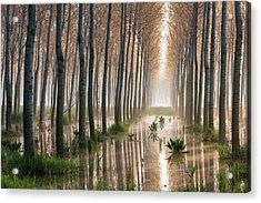 Rains Of Spring Acrylic Print