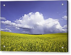 Rainstorm Over Canola Field Crop Acrylic Print by Ken Gillespie