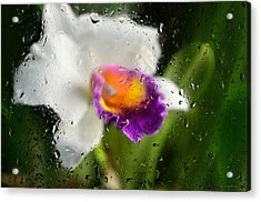 Rainy Day Orchid - Botanical Art By Sharon Cummings Acrylic Print