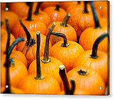 Acrylic Print featuring the photograph Rainy Day Pumpkins by Ira Shander