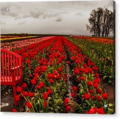 Rainy Day Tulips Acrylic Print by Nancy Marie Ricketts