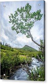 Rainy Evening On A Mountain Stream Acrylic Print