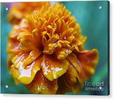 Rainy Marigolds Acrylic Print