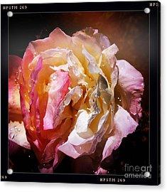 Rainy Rose Acrylic Print