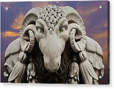 Ram-a-sees Acrylic Print by David Davies