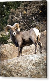 Acrylic Print featuring the photograph Ram Bluff by Kevin Munro
