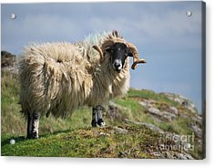 Acrylic Print featuring the photograph Ram by Juergen Klust