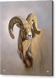 Ram Portrait Acrylic Print by Paul Krapf