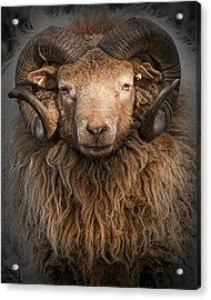 Ram Portrait Acrylic Print