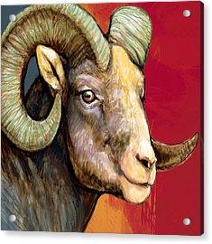 Ram - Sheep Stylised Drawing Art Poster Acrylic Print