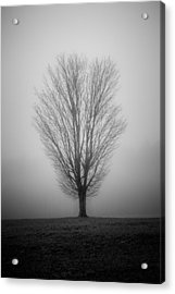 Ramblin' Tree Acrylic Print