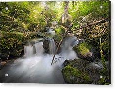 Ramona Creek Acrylic Print by David Gn