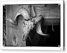 Ram's Head - Art Unexpected Acrylic Print by Tom Mc Nemar