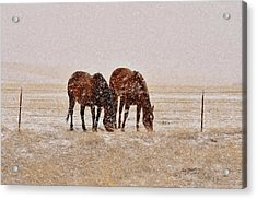 Ranch Horses In Snow Acrylic Print