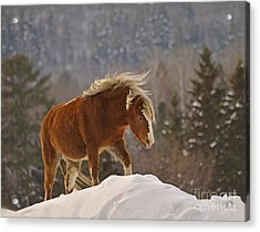 Rancher's Dream Acrylic Print