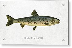 Rangeley Trout Acrylic Print by Aged Pixel