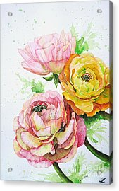 Ranunculus Flowers Acrylic Print
