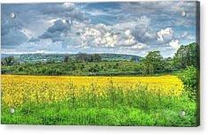 Rapeseed Field Acrylic Print by Paul Muscat