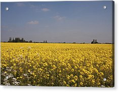 Acrylic Print featuring the photograph Rapeseed Field. by Paul Scoullar