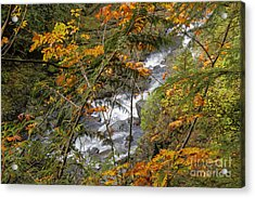 Rapids Through The Autumn Acrylic Print by Darleen Stry