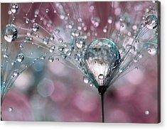 Rasberry Sparkles Acrylic Print